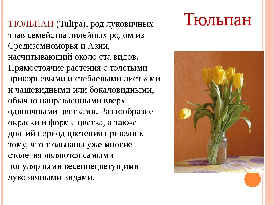 ТЮЛЬПАН (Tulipa), род луковичных трав семейства лилейных родом из Средиземном...