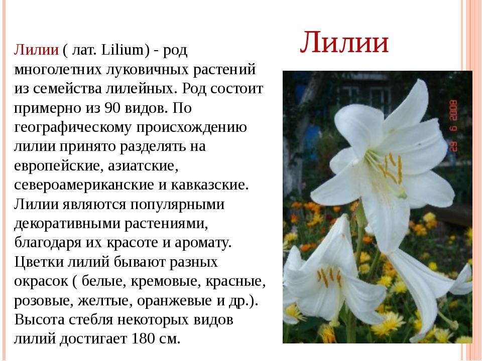 Лилии ( лат. Lilium) - род многолетних луковичных растений из семейства лилей...