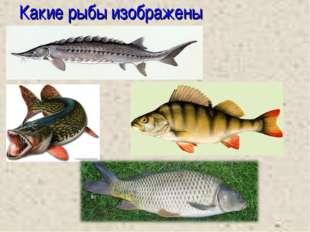 Какие рыбы изображены