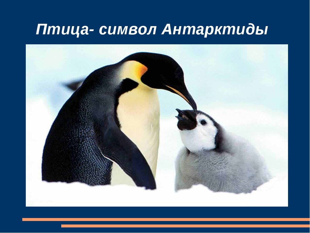 Птица- символ Антарктиды
