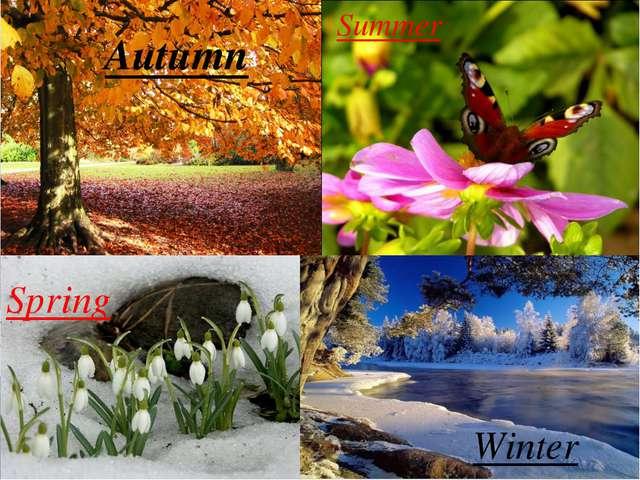 Spring Autumn Summer Winter