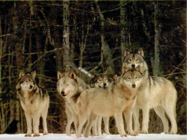 Заповедники- это участки земли, где вся природа находится под строгой охраной.