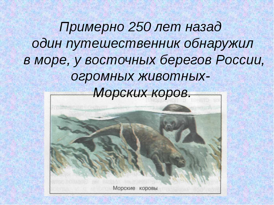 Примерно 250 лет назад один путешественник обнаружил в море, у восточных бере...