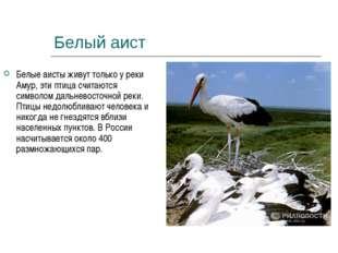 Белый аист Белые аисты живут только у реки Амур, эти птица считаются символом