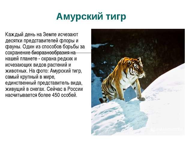 Амурский тигр Каждый день на Земле исчезают десятки представителей флоры и фа...