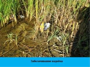 Заболачивание водоёма