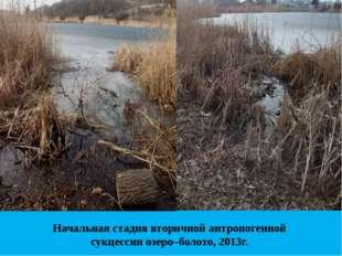 Начальная стадия вторичной антропогенной сукцессии озеро–болото, 2013г.