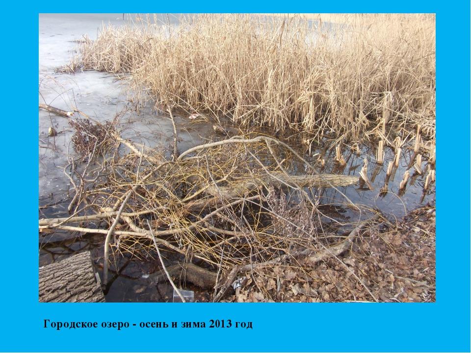 Городское озеро - осень и зима 2013 год