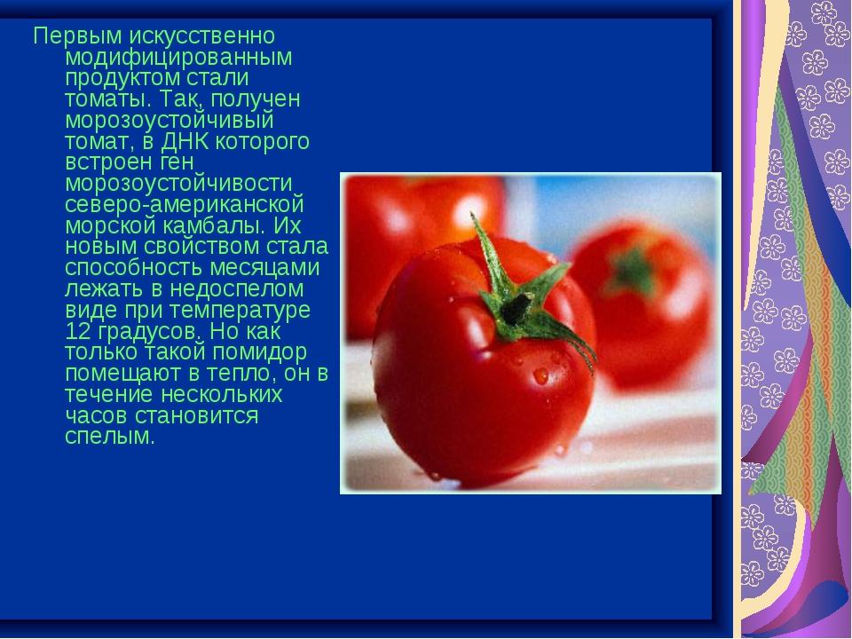 Первым искусственно модифицированным продуктом стали томаты. Так, получен мор...