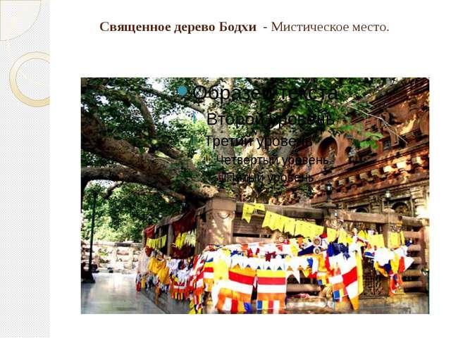 Священное дерево Бодхи - Мистическоеместо.