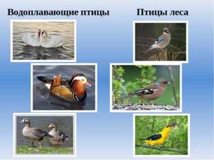 Водоплавающие птицы Птицы леса