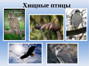 Хищные птицы