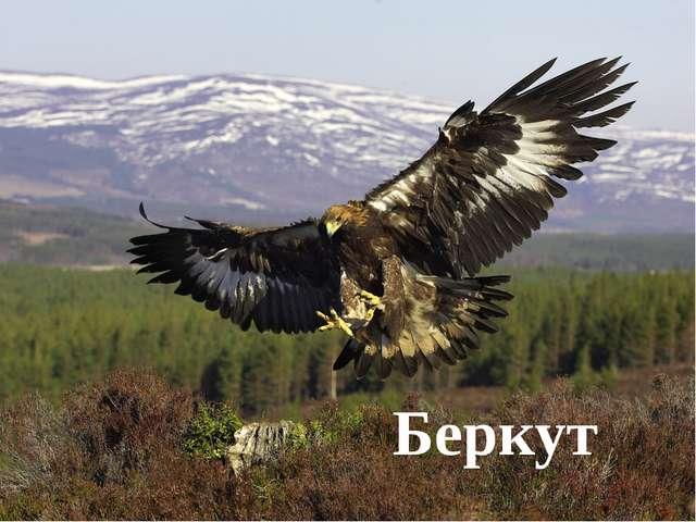 Этот птичий царь могучий Вьет гнездо на горной круче. Он наводит дикий страх...