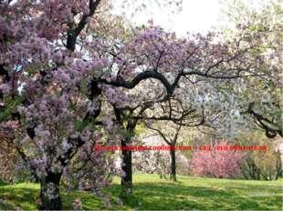 Искусственное сообщество – сад, его обитатели