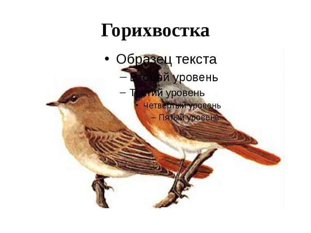 Горихвостка