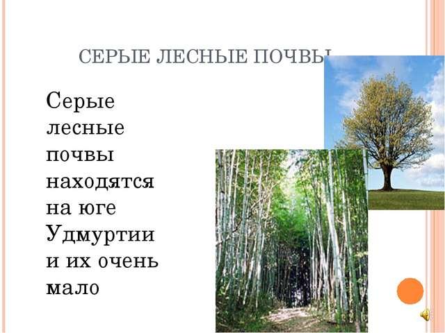 СЕРЫЕ ЛЕСНЫЕ ПОЧВЫ Серые лесные почвы находятся на юге Удмуртии и их очень м...