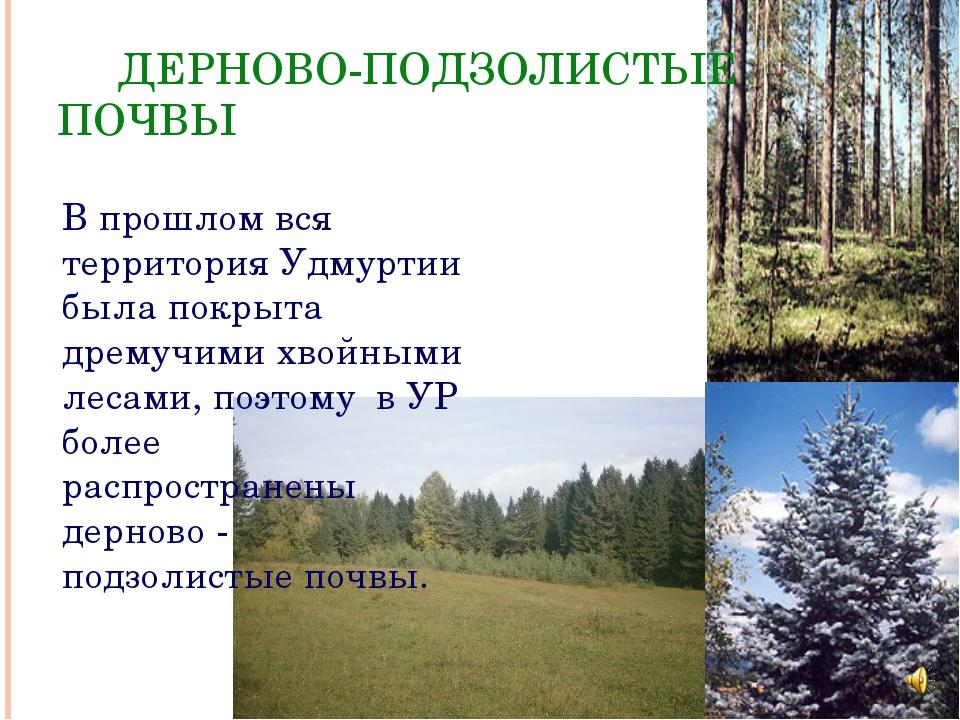 ДЕРНОВО-ПОДЗОЛИСТЫЕ ПОЧВЫ В прошлом вся территория Удмуртии была покрыта дре...