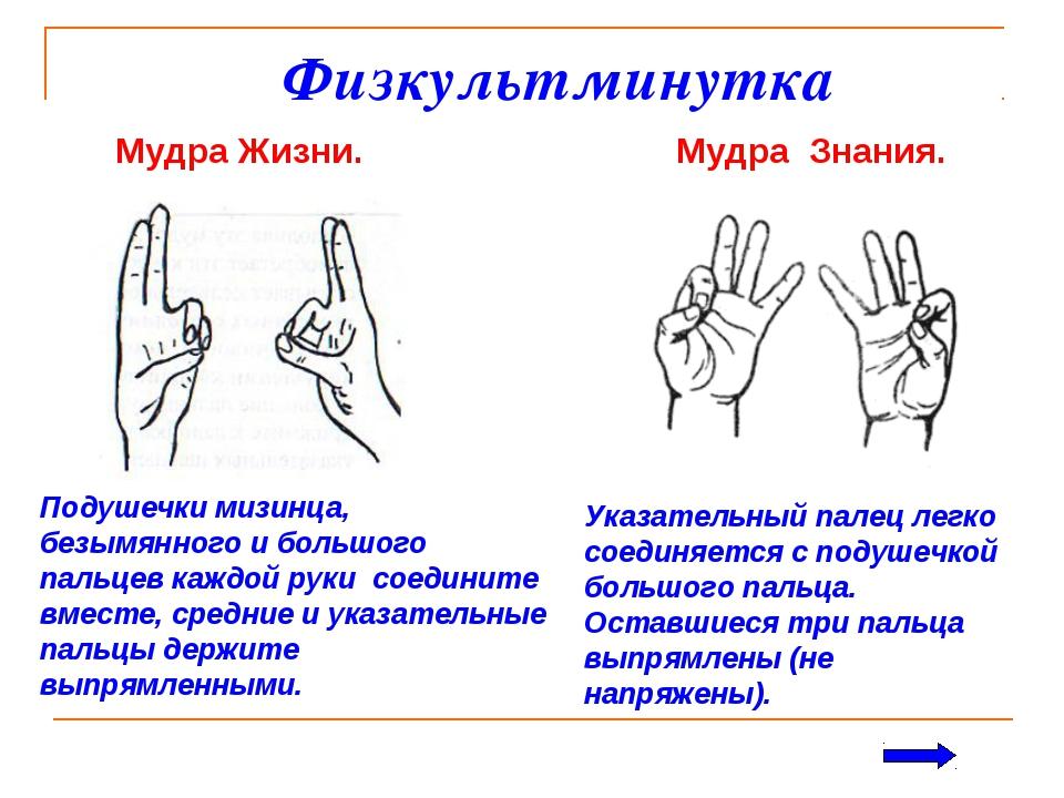 Физкультминутка Мудра Жизни. Мудра Знания. Указательный палец легко соединяе...