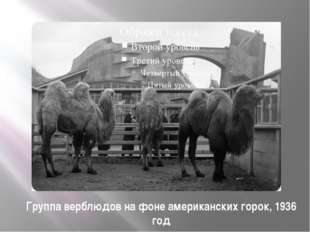 Группа верблюдов на фоне американских горок, 1936 год