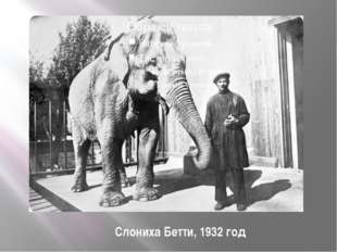 Слониха Бетти, 1932 год