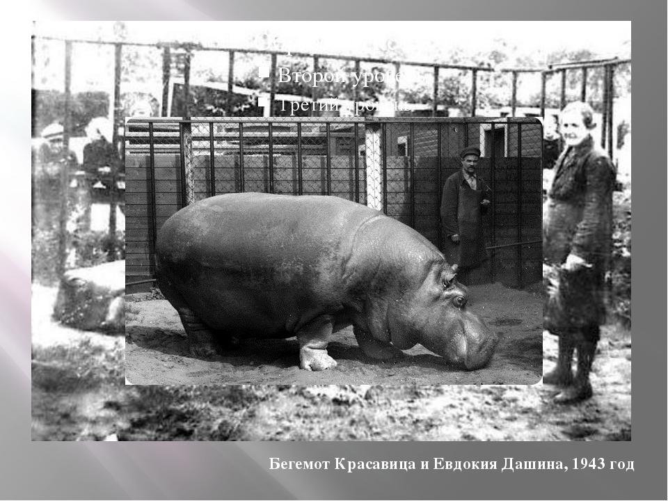 Бегемот Красавица и Евдокия Дашина, 1943 год