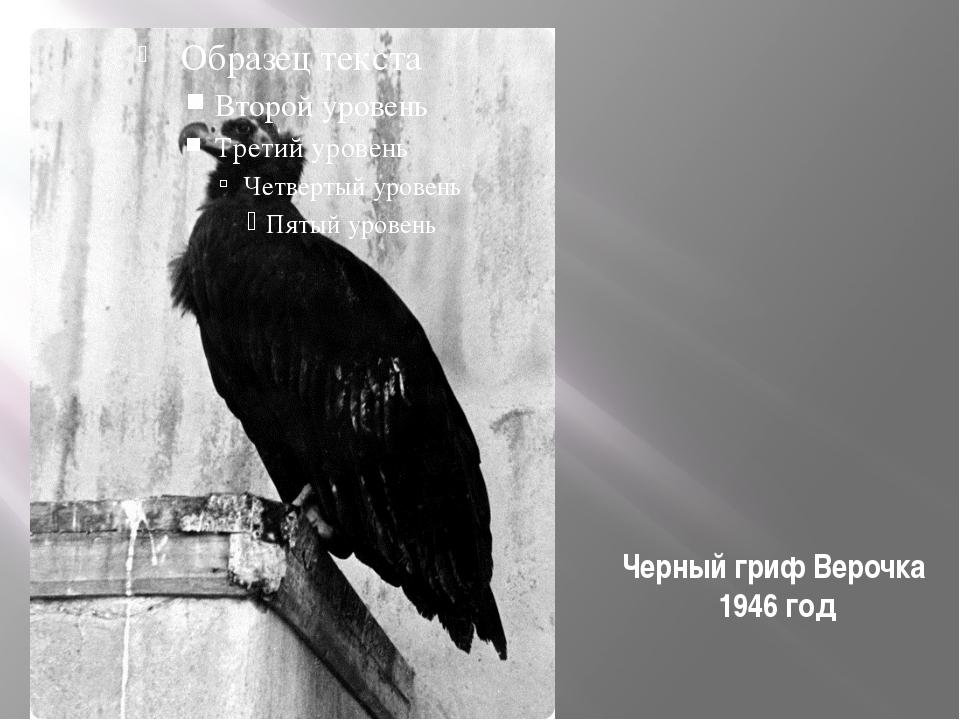 Черный гриф Верочка 1946 год