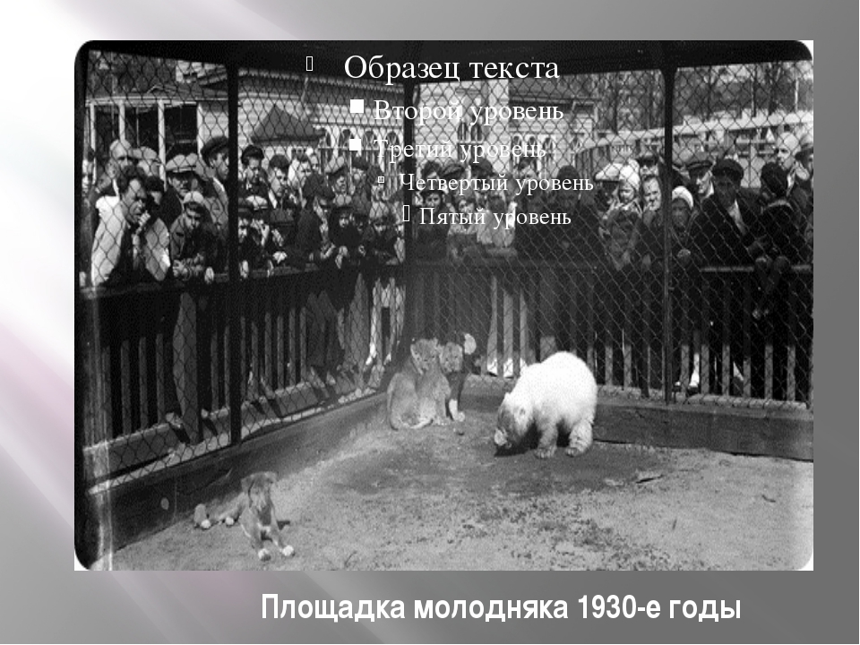 Площадка молодняка 1930-е годы