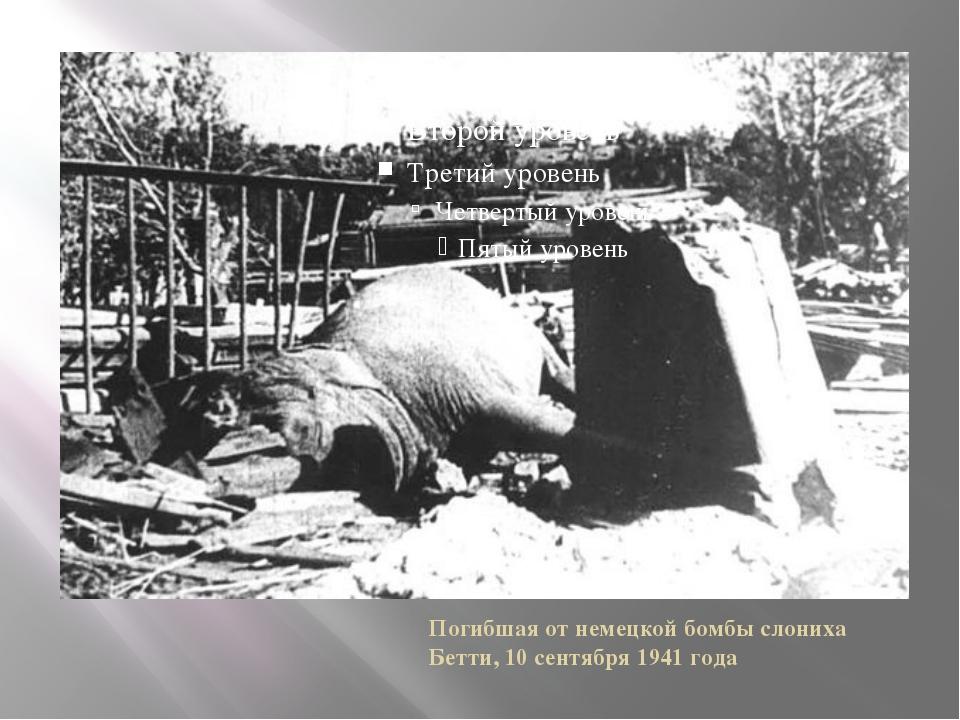 Погибшая от немецкой бомбы слониха Бетти, 10 сентября 1941 года