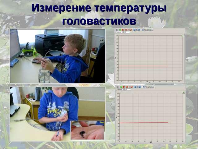 Измерение температуры головастиков