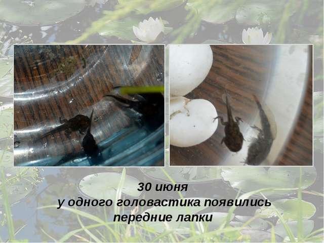 30 июня у одного головастика появились передние лапки