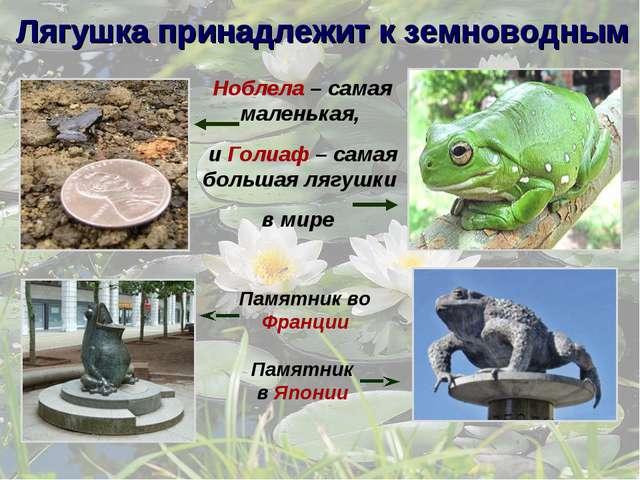 Ноблела – самая маленькая, и Голиаф – самая большая лягушки в мире Памятник в...