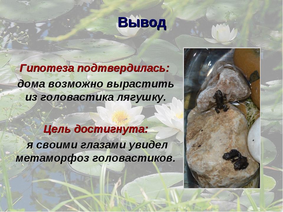 Вывод Гипотеза подтвердилась: дома возможно вырастить из головастика лягушку....
