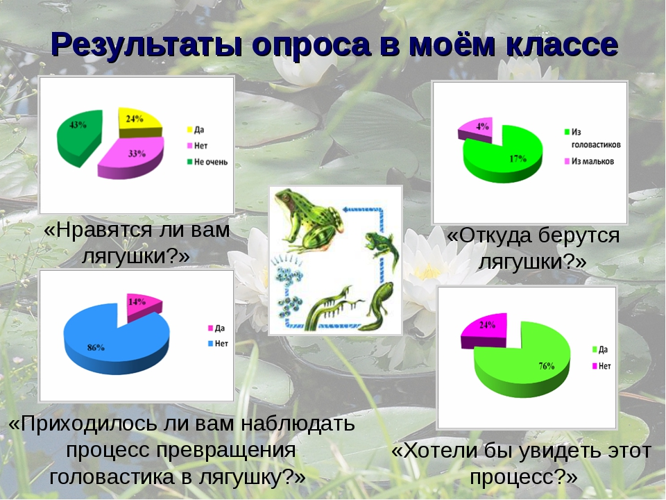 Результаты опроса в моём классе «Нравятся ли вам лягушки?» «Откуда берутся ля...