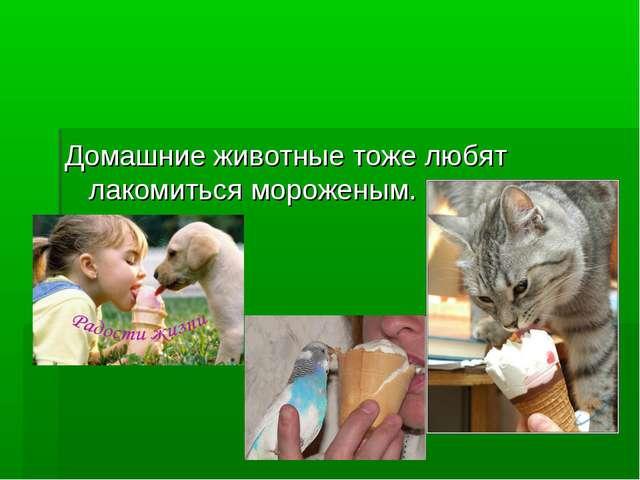 Домашние животные тоже любят лакомиться мороженым.