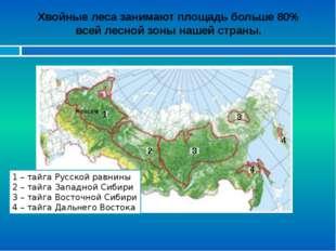 Хвойные леса занимают площадь больше 80% всей лесной зоны нашей страны. 1 – т