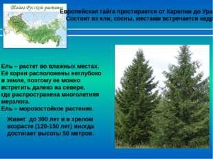 Европейская тайга простирается от Карелии до Урала. Состоит из ели, сосны, ме