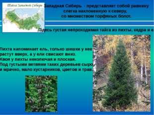 Западная Сибирь - представляет собой равнину слегка наклоненную к северу, со