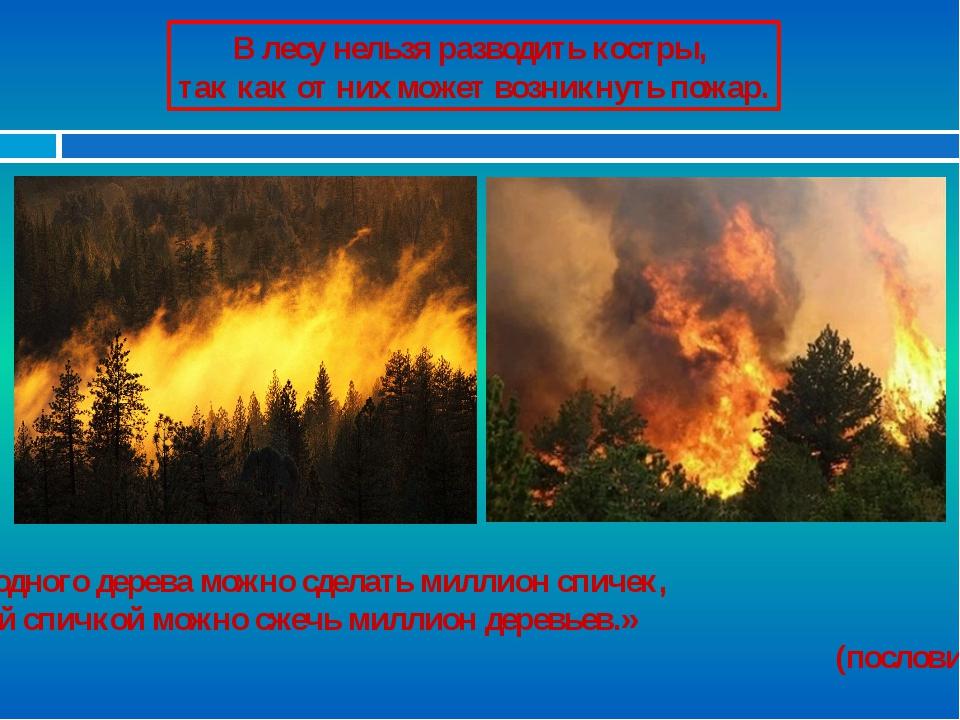 В лесу нельзя разводить костры, так как от них может возникнуть пожар. «Из од...