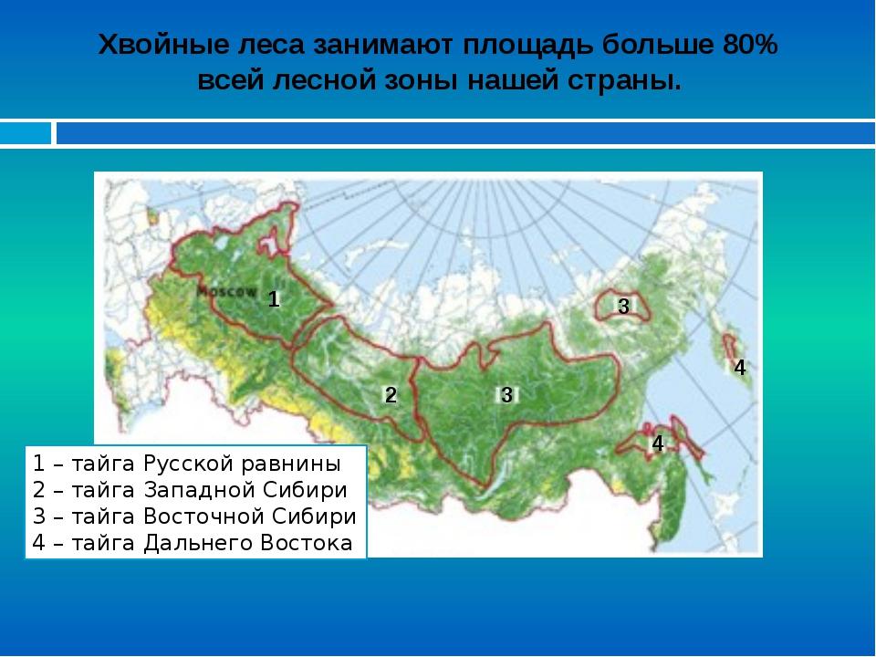 Хвойные леса занимают площадь больше 80% всей лесной зоны нашей страны. 1 – т...