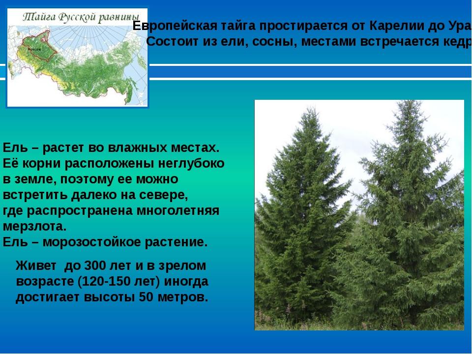 Европейская тайга простирается от Карелии до Урала. Состоит из ели, сосны, ме...