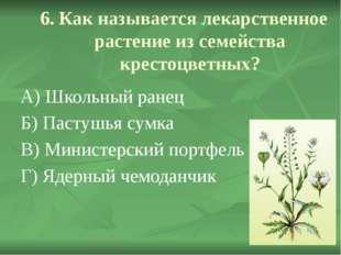 6. Как называется лекарственное растение из семейства крестоцветных? А) Школ