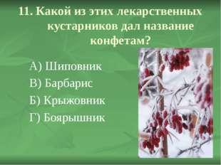 11. Какой из этих лекарственных кустарников дал название конфетам? А) Шиповни