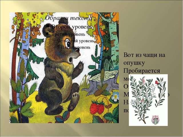 Вот из чащи на опушку Пробирается медведь - Он решил Медвежье Ушко На опушке...