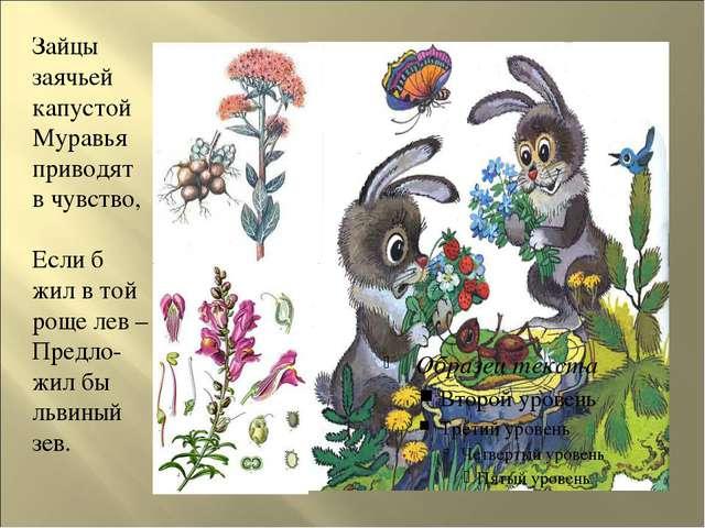 Зайцы заячьей капустой Муравья приводят в чувство, Если б жил в той роще лев...