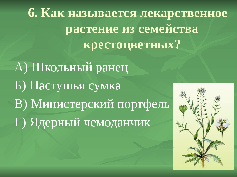6. Как называется лекарственное растение из семейства крестоцветных? А) Школ...
