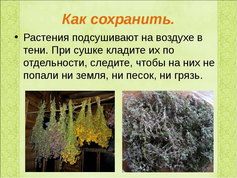 Как сохранить. Растения подсушивают на воздухе в тени. При сушке кладите их п...