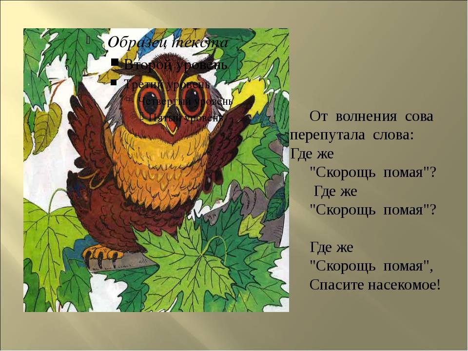 """От волнения сова перепутала слова: Где же """"Скорощь помая""""? Где же """"Скорощь п..."""