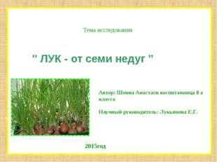 """Тема исследования """" ЛУК - от семи недуг """" Автор: Шеина Анастаси воспитанница"""