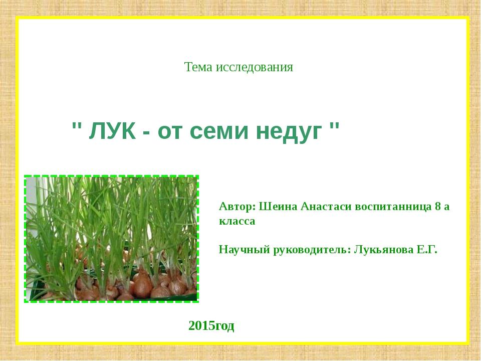 """Тема исследования """" ЛУК - от семи недуг """" Автор: Шеина Анастаси воспитанница..."""