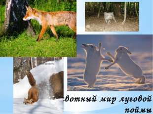Животный мир луговой поймы